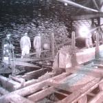1906 - Capitan Pastene (Cile)  - Lavoro in una segheria