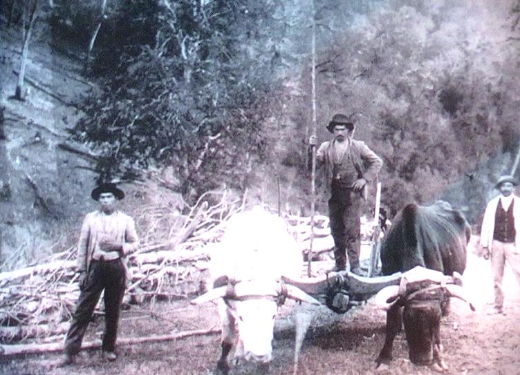 1906 - Capitan Pastene (Cile) - Emigranti emiliani al lavoro nei campi